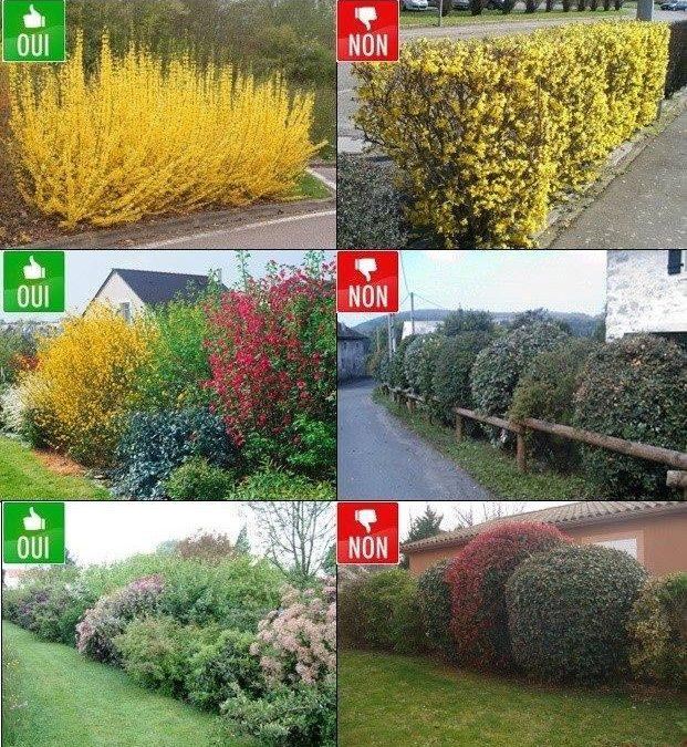 N'hesitez pas à nous contacter pour la taille de vos arbustes !!!